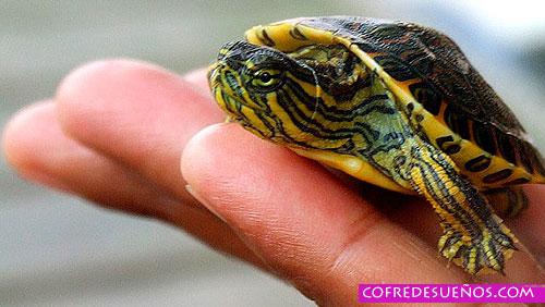 sonar con tortugas pequenas