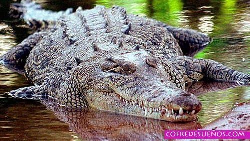sonar con cocodrilo gigante