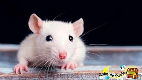 sonar con ratones blancos